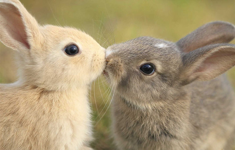 Image of: Adorable Cuteanimalskissing2 Top13 36 Beautiful Animal Love Pictures To Celebrate Valentines Day Top13