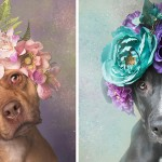 Woman Photographs Shelter Pit Bulls With Flower Crowns To Help Them Get Adopted