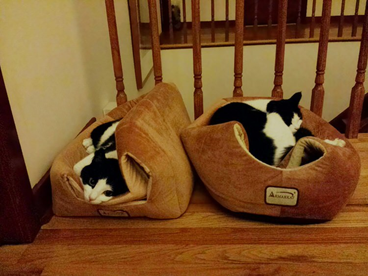 cat-logic-beds-3