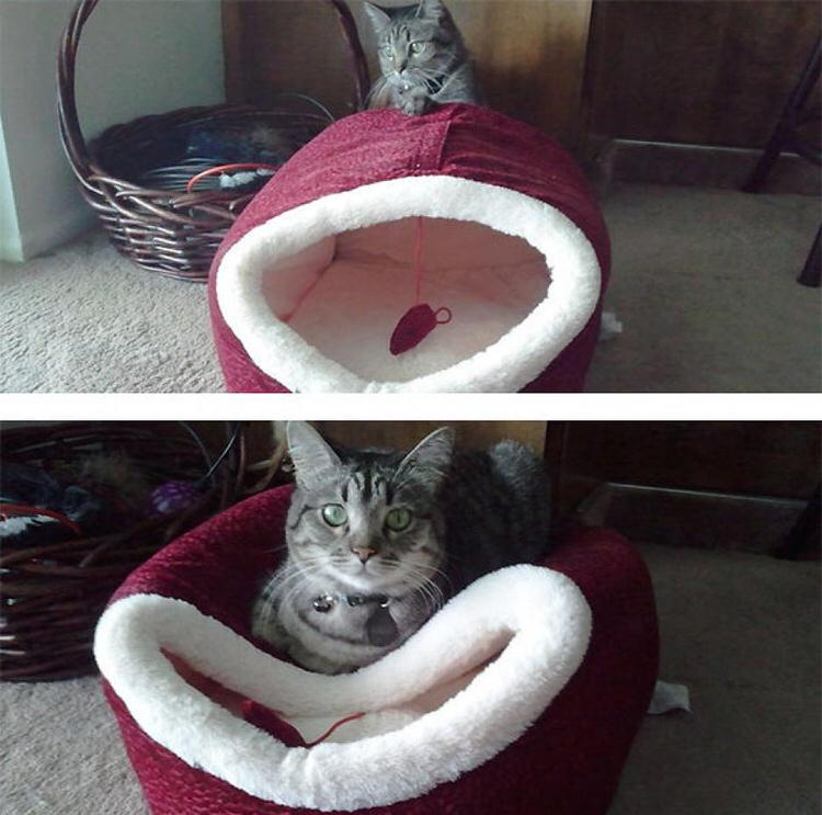 cat-logic-beds-5