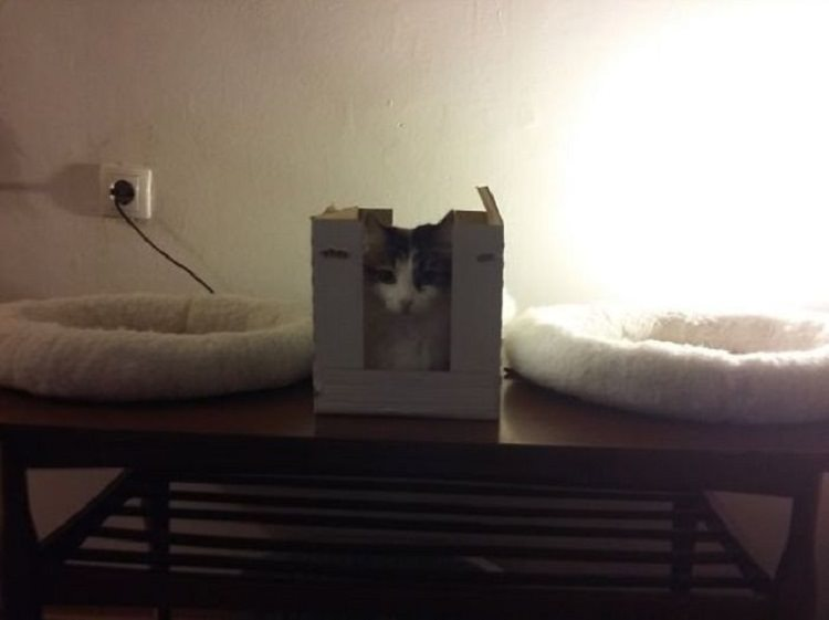 cat-logic-boxes-2