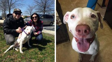 Adorable Rescued Pit Bull Is All Smiles In His New Home