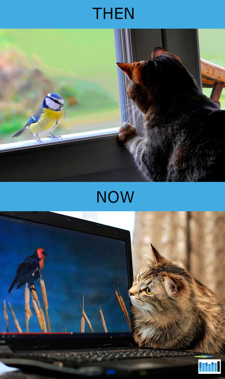 cats-then-now-funny-technology-10