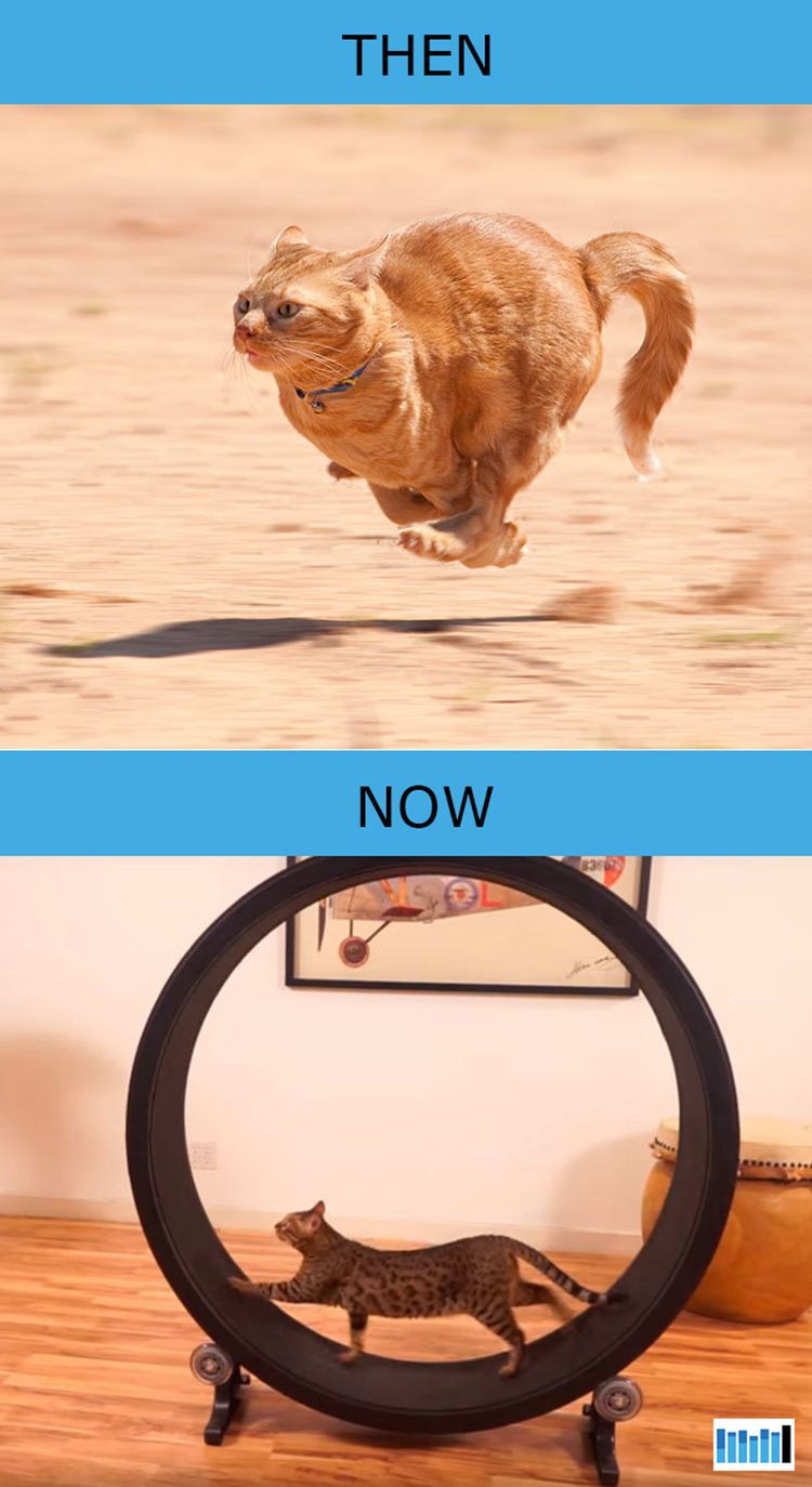 cats-then-now-funny-technology-14