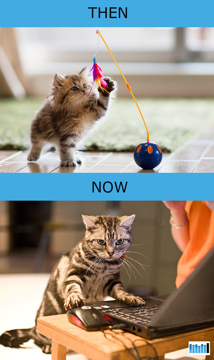 cats-then-now-funny-technology-3
