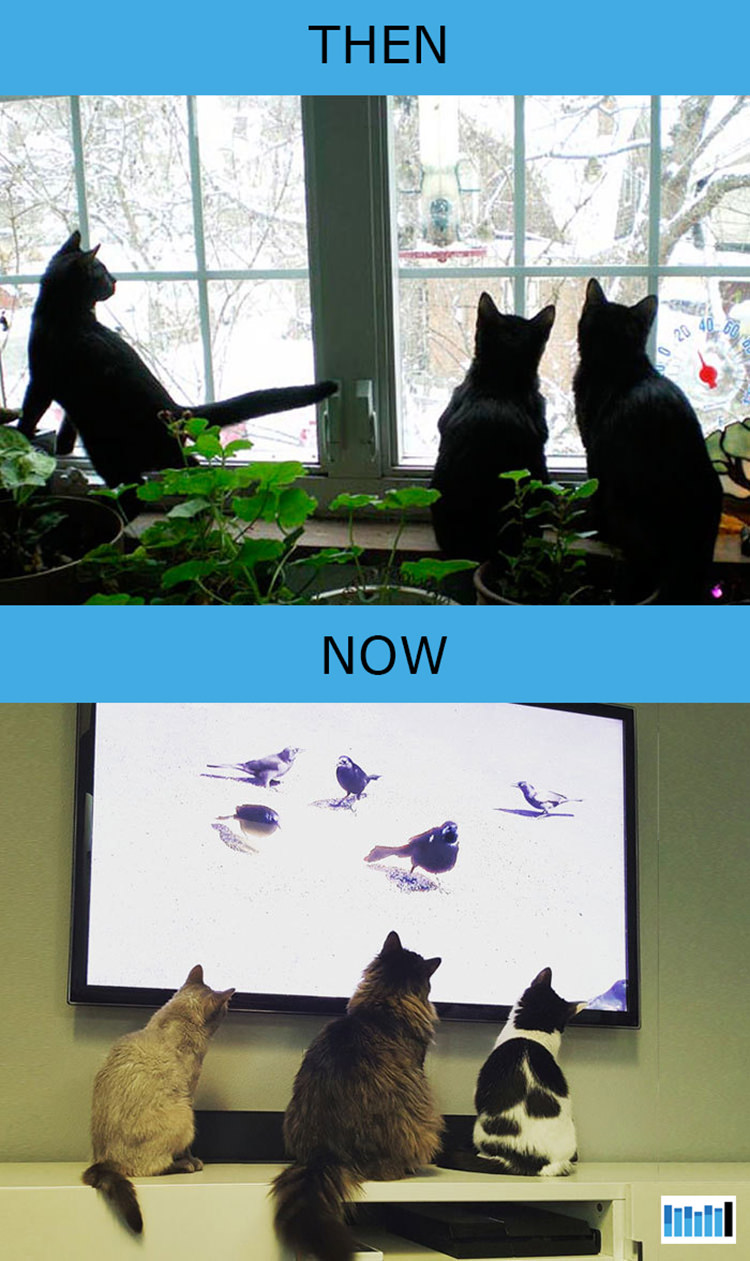 cats-then-now-funny-technology-8