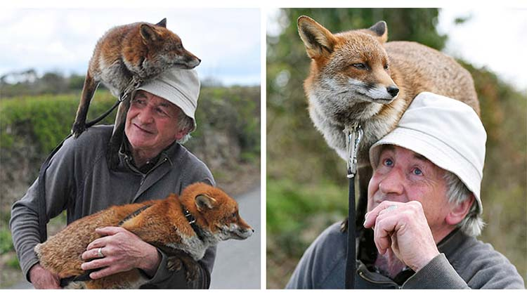 Man Rescues Foxes And Ends Up Adopting Them