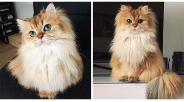 This Cat Is More Photogenic Than Any Human Being