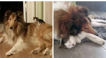 Dog And Kitten Became Inseparable Since Day One