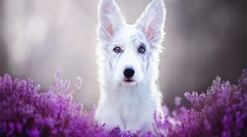 Photographer Takes The Most Amazing Pictures Of Dogs