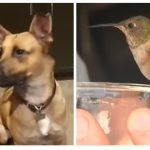 Dog Rescues Hummingbird And Now Won't Leave His Side