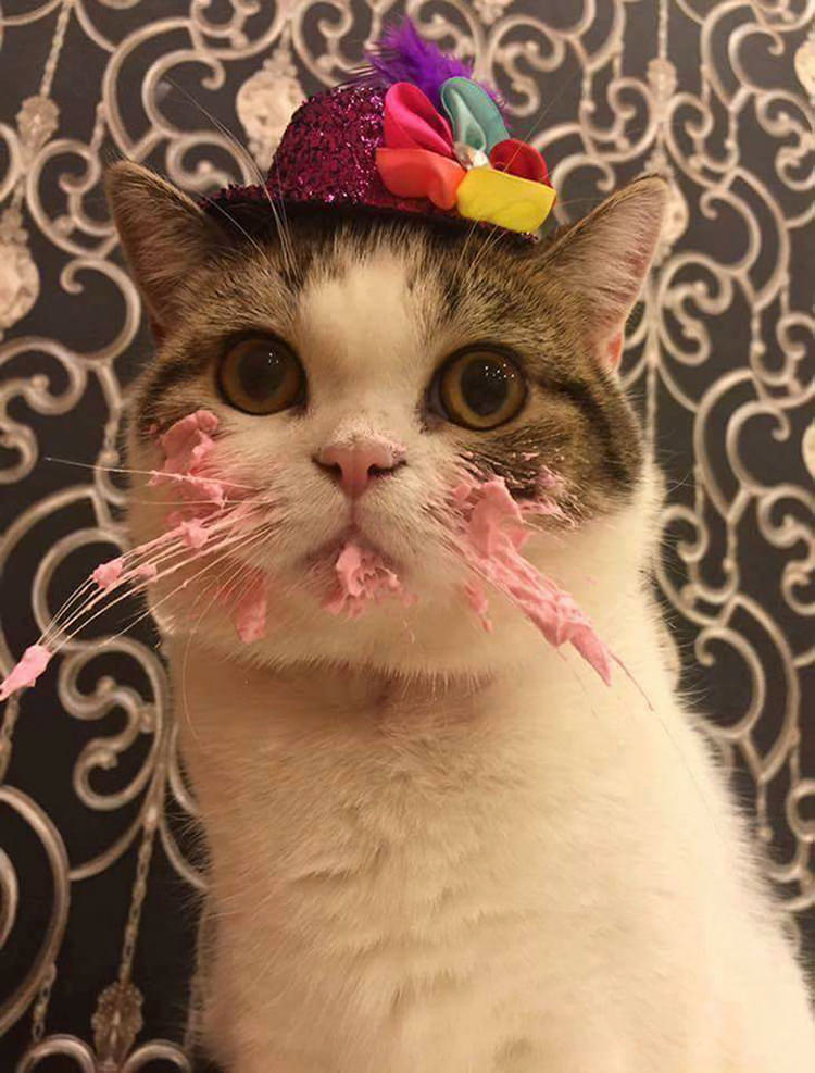This Cat Got A Birthday Cake And Its Adorable Top13