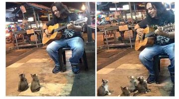 3-Month Old Kittens Come To Listen To A Street Singer People Ignored