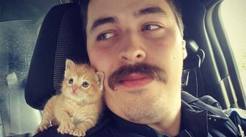 Cop Finds Abandoned Kitty And Makes Him His Crime-Fighting Partner