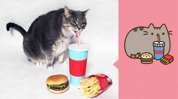 This Guy Recreated Pusheen Stickers With His Cat
