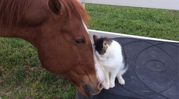 Kitten And Horse Became Best Friends Since They First Met