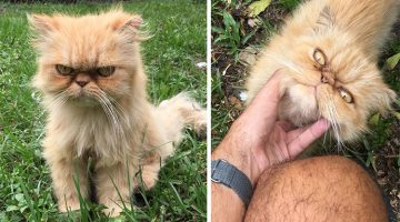 House Inspector Finds Homeless Grumpy Kitten And Ends Up Adopting Him