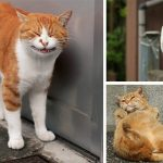 Japanese Photographer Documents The Different Faces Of Tokyo's Stray Cats