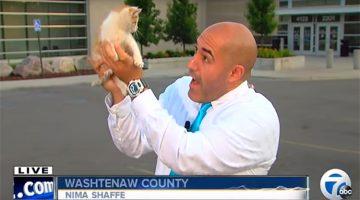 Kitten Gets Rescued By Interrupting Live Newscast