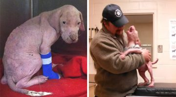 Pit Bull Puppy Gets Super Excited When His Rescuer Comes Back To Adopt Him
