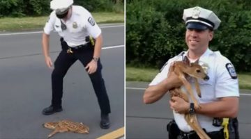 Police Man Rescues Fawn From Getting Run Over