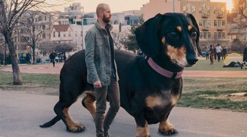Man Photoshops His Dachshund Dog As Big As She Think She is