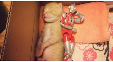 3-Day-Old Rescue Kitten Grows Up With A Superhero