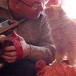 This Cat Hugs And Kisses His Human When He Plays The Accordion For Him