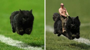 The Internet Goes Crazy After This Cat Interrupted a Rugby Game