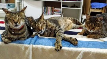 Woman Adopted 3 Blind Cats Nobody Else Wanted