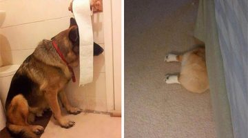 22 Dogs Who Are Terrible At Hide And Seek