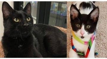 This Couple Adopted A Cat And Then Went Back For His Best Friend