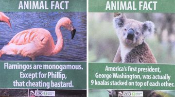 This Guy Leaves Hilarious Fake Animal Facts On The Los Angeles Zoo
