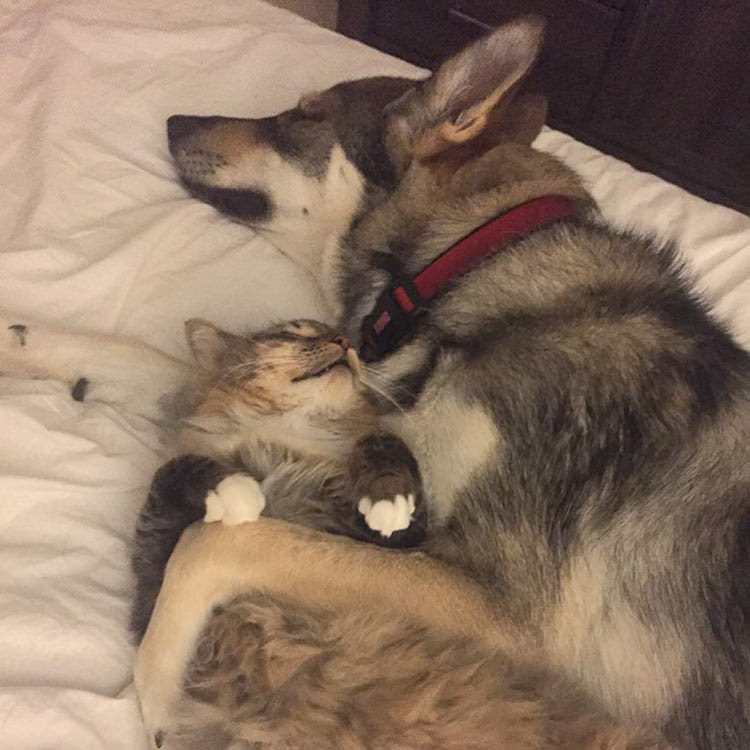 Husky Picked Out Her Own Shelter Kitten To Take Home