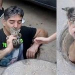This Man Jumped Into A Storm Drain To Save a Kitten