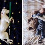 Rescued Dog And 8-Month-Old Baby Are The Best Sleeping Buddies