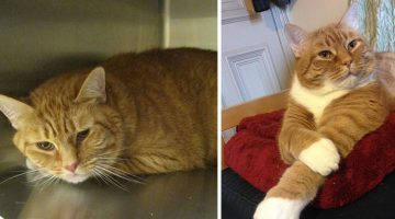 Woman Takes Sad Shelter Cat And Turns His Frown Into A Smile