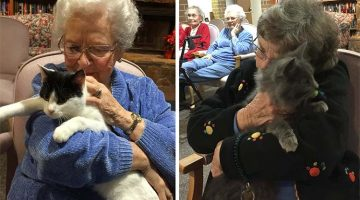 Shelter Brings Senior Cats To Seniors In Nursing Homes For Them To Comfort Each Other