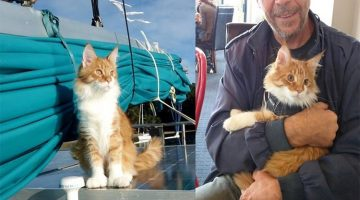 Cat Becomes Deaf Sailor's Ears And Helps Him Navigate