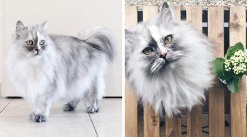 This Adopted Cat Has Beautiful Marble-Looking Fur