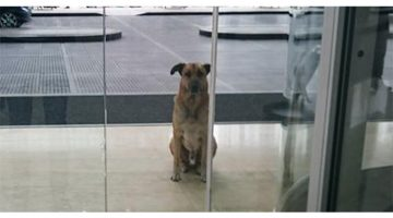 Stray Dog Gets Adopted After Constantly Waiting For Flight Attendant To Come Back