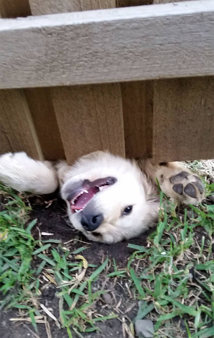 15 Hilarious Dogs That Just Want To Say Hi Top13