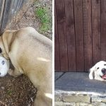 15 Hilarious Dogs That Just Want To Say Hi