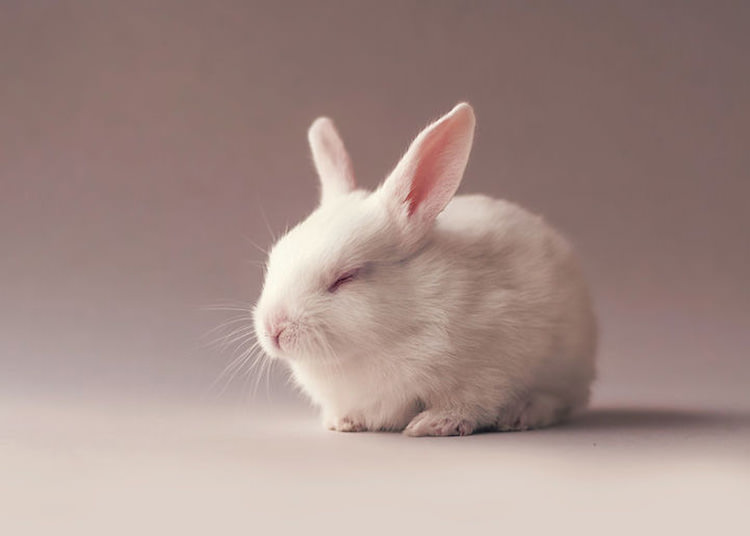 Photographer Gives His Newborn Pet Bunny The Cutest