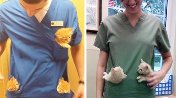 23 Perks Of Working At An Animal Hospital