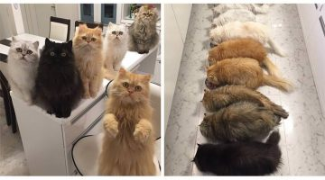Real Life Cat Lady Is Taking Instagram By Storm