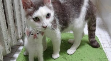 Rescue Cat Mom Adopts Tiny Motherless Kitten