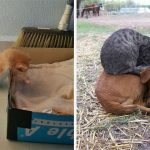 23 Funny Pictures Of Cats Sleeping In Crazy Positions
