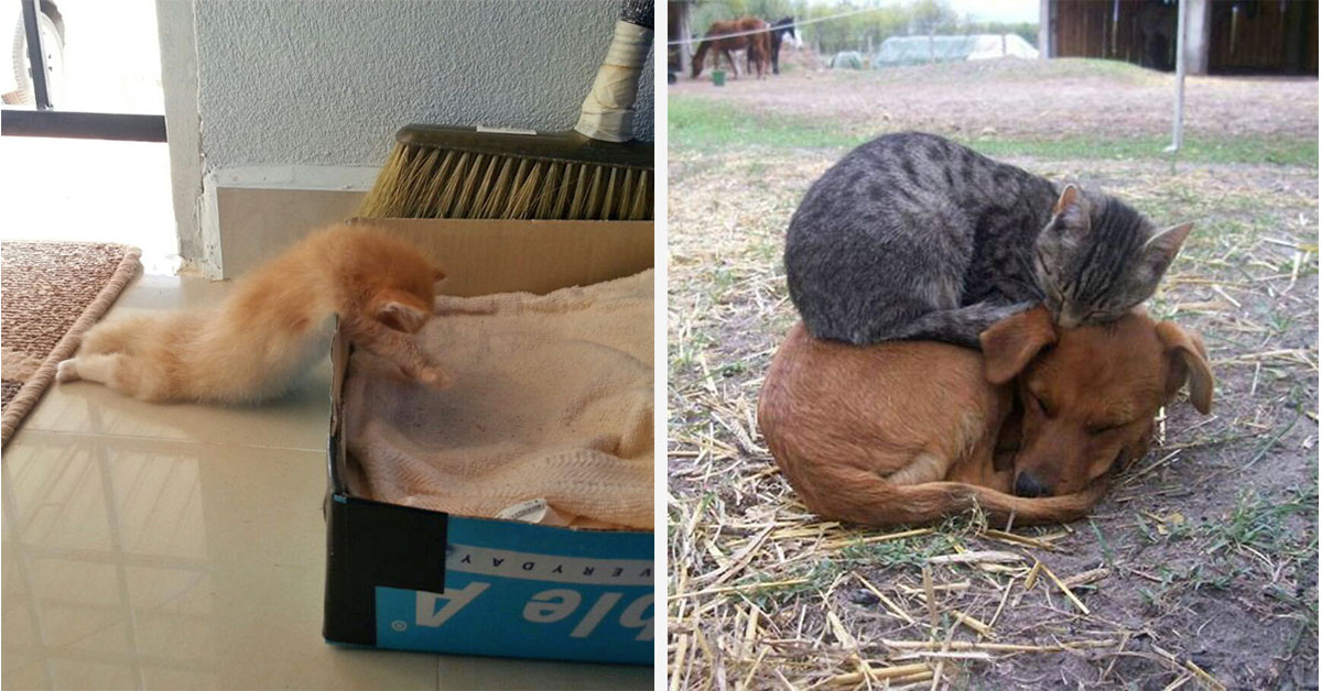 Cats That Can Sleep Anywhere