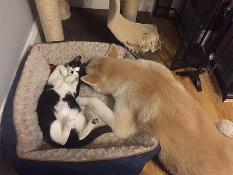 Cats That Steal Dogs Beds Video